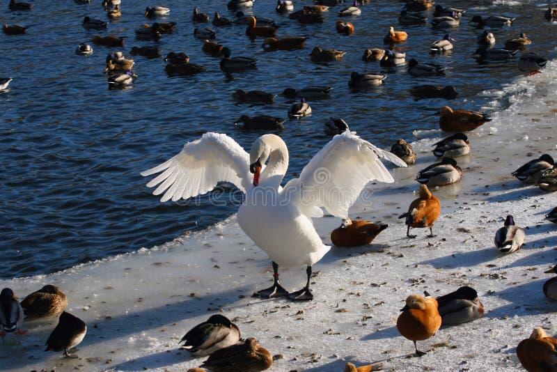 Vogelgemeinschaft. lizenzfreies stockfoto