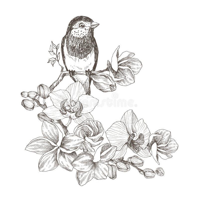 Vogelhand gezeichnet in Weinleseart mit tropischen Blumen Frühlingsvogel, der auf Blütenniederlassungen der Orchidee sitzt linear lizenzfreie abbildung