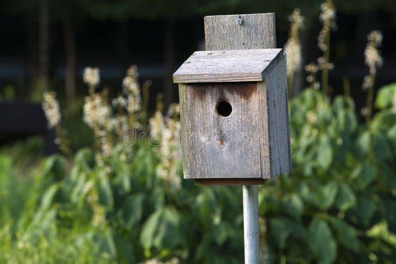 Vogelhaus im Frühsommer lizenzfreies stockfoto