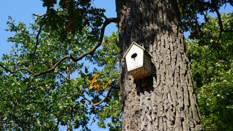 Vogelhaus im Park lizenzfreie stockbilder