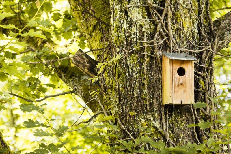 Vogelhuis in een bos royalty-vrije stock afbeeldingen
