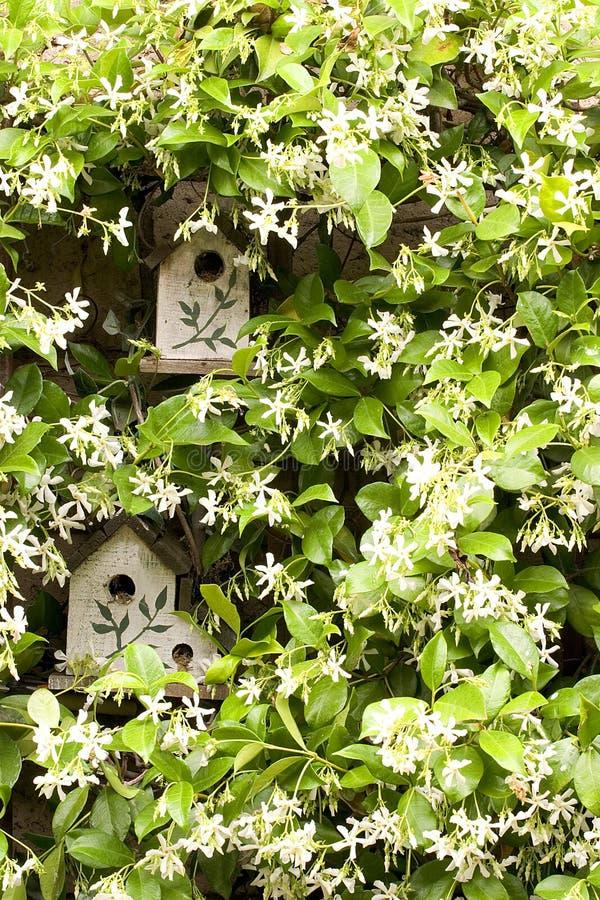 Vogelhuis met jasmijn royalty-vrije stock foto's