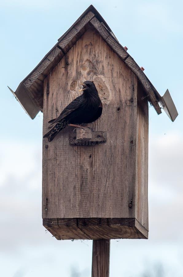 Vogelhuis met zijn inwoner het starling royalty-vrije stock afbeelding