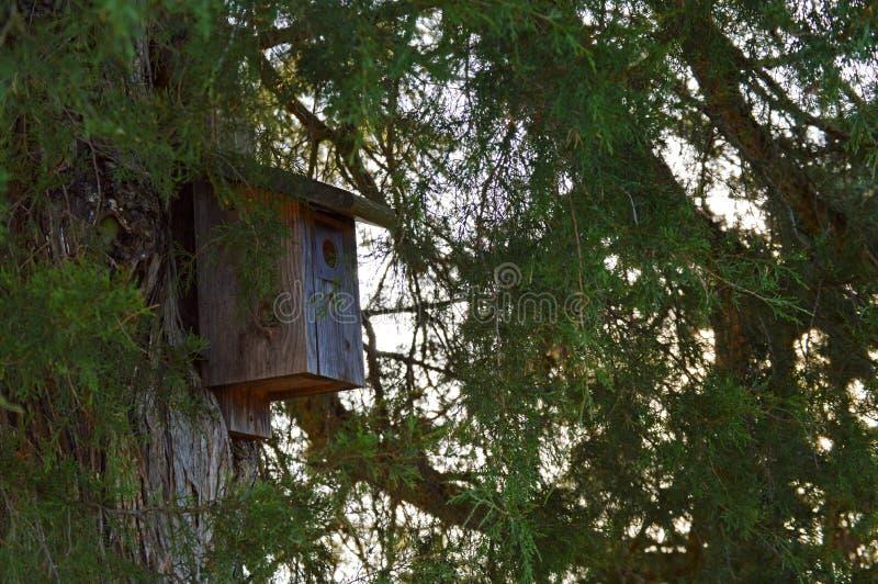 Vogelhuis op een grote boom stock afbeeldingen