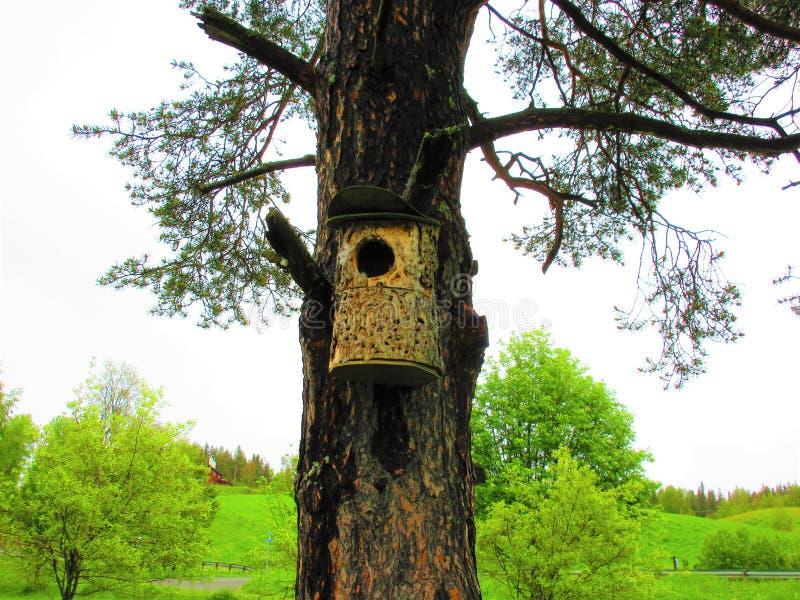 Vogelhuis op een oude pijnboom De slag, klopt thuis zijn om het even wie royalty-vrije stock afbeelding