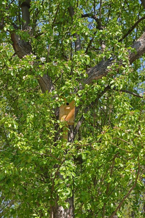 Vogelhuis op tot bloei komende appelboom royalty-vrije stock fotografie