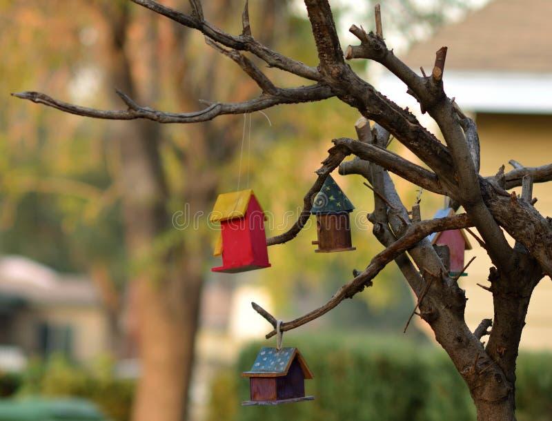 Vogelhuisvesting royalty-vrije stock foto