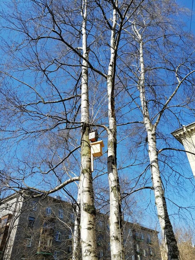 Vogelhuizen op bomen in de yard stock afbeeldingen