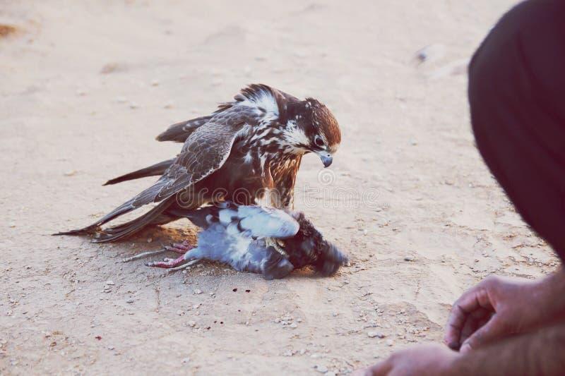 Vogeljäger stockfotos