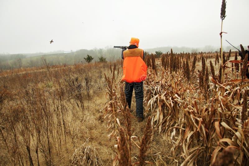 Vogeljager die op gebied Fazant schieten stock foto
