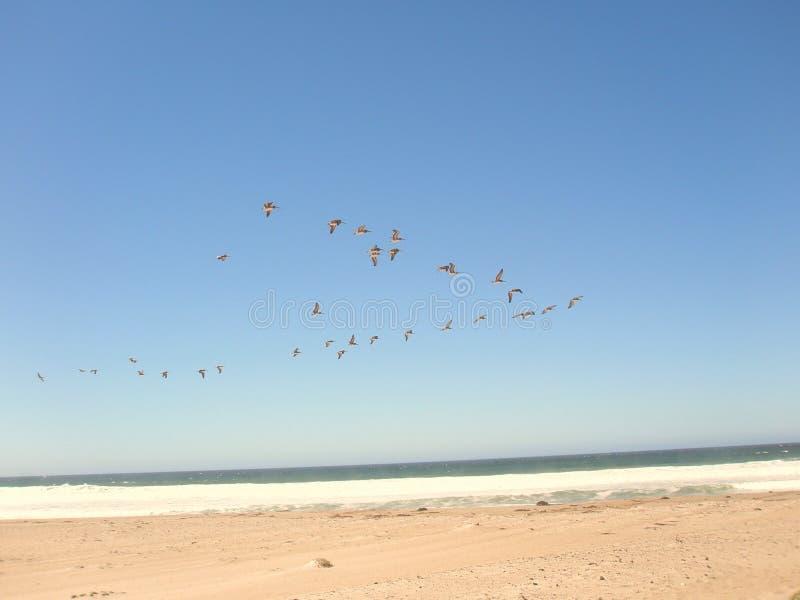Vogelmigratie stock foto's