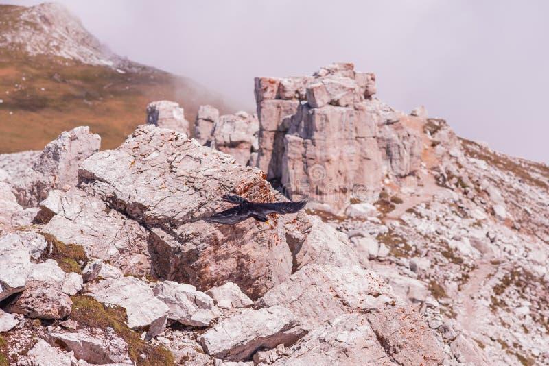 Vogelnehmen von des Felsens lizenzfreies stockfoto