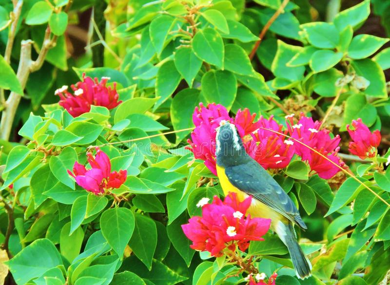 Vogelnest stock afbeelding