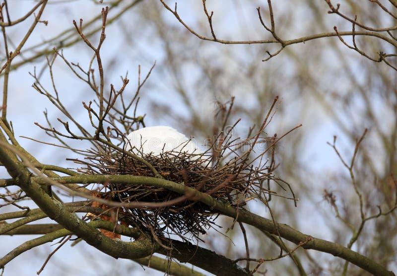 Vogelnest auf Niederlassung im Winter mit Schnee stockfoto