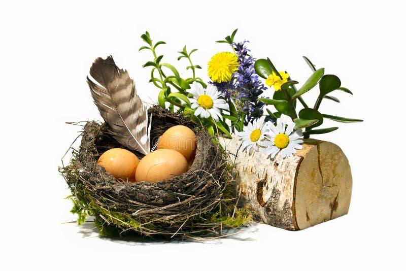 Vogelnest, Eier, Feder und Frühlingsblumen stockbild