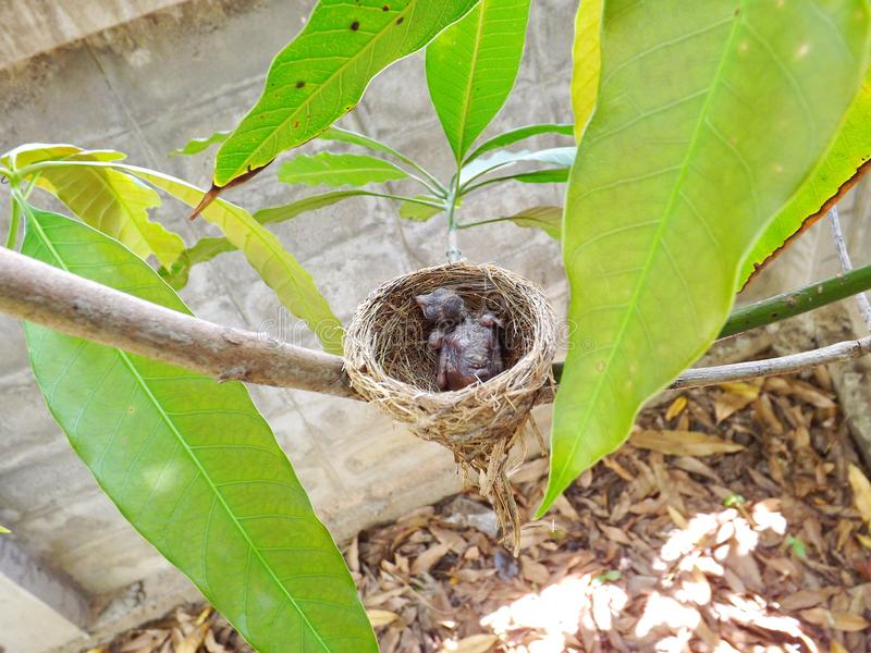 Vogelnest im Nest lizenzfreies stockbild