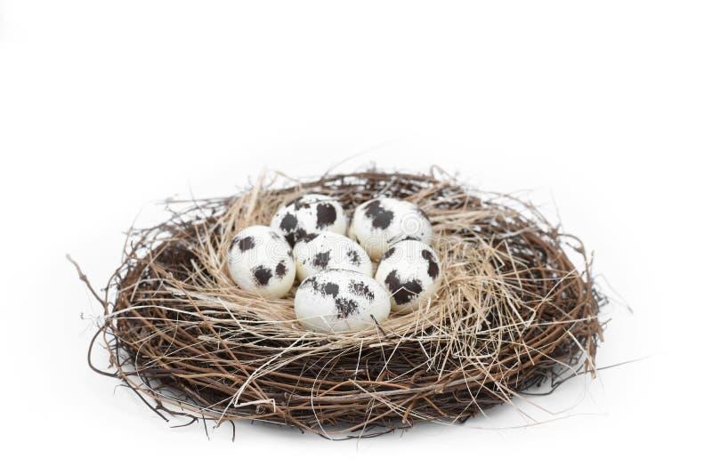 Vogelnest met een groep van 6 natuurlijke bevlekte eieren stock fotografie