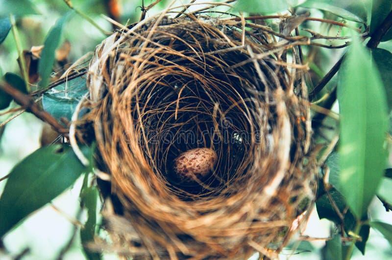 VOGELnest - Vogelnest met ei in de ochtend in het park van het aardregenwoud stock foto