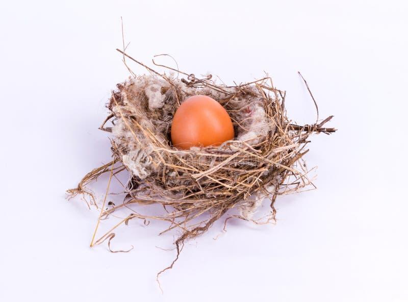 Vogelnest met ei op witte achtergrond wordt geïsoleerd die royalty-vrije stock fotografie