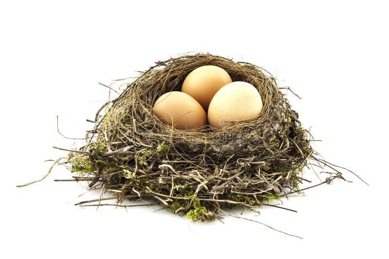 Vogelnest mit Eiern stockbild