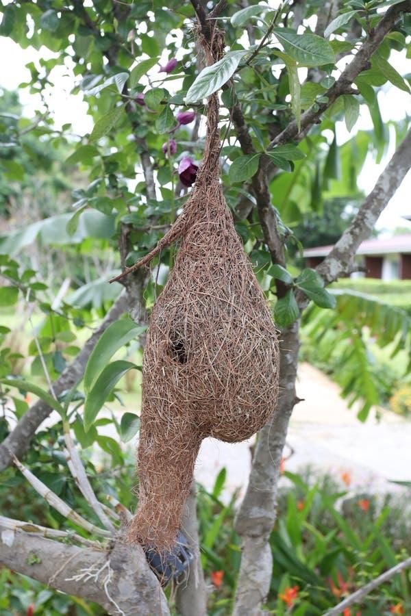 Vogelnest- oder -feldlerchennester auf Baum lizenzfreies stockbild