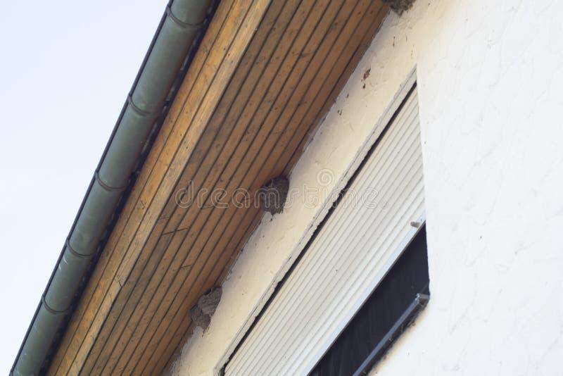 Vogelnesten op een huis onder het dak stock foto's