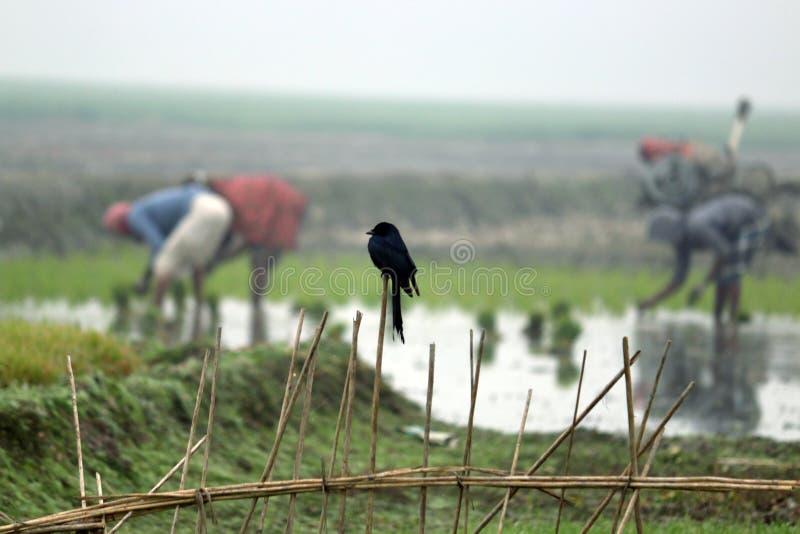 Vogelonderzoek zijn voedsel royalty-vrije stock afbeeldingen