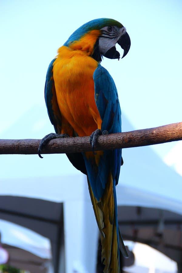 Vogelpapegaai royalty-vrije stock afbeelding