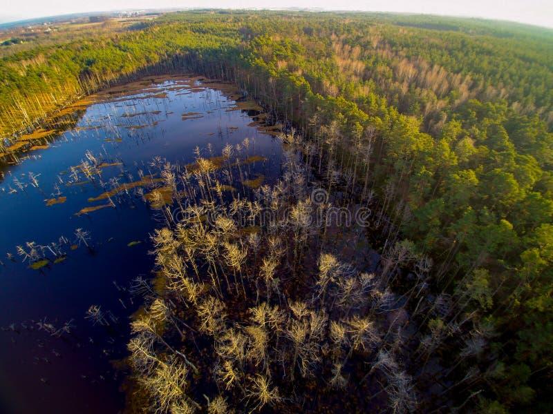Vogelperspektive auf Wald und Sumpf in Celestynow in Polen stockfoto