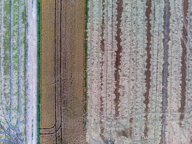 Vogelperspektive der Reisfelder stockbild