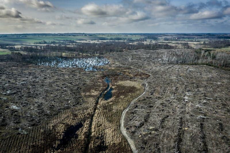 Vogelperspektive der schrecklichen Abholzung, zerstörter Wald für das Ernten lizenzfreies stockbild
