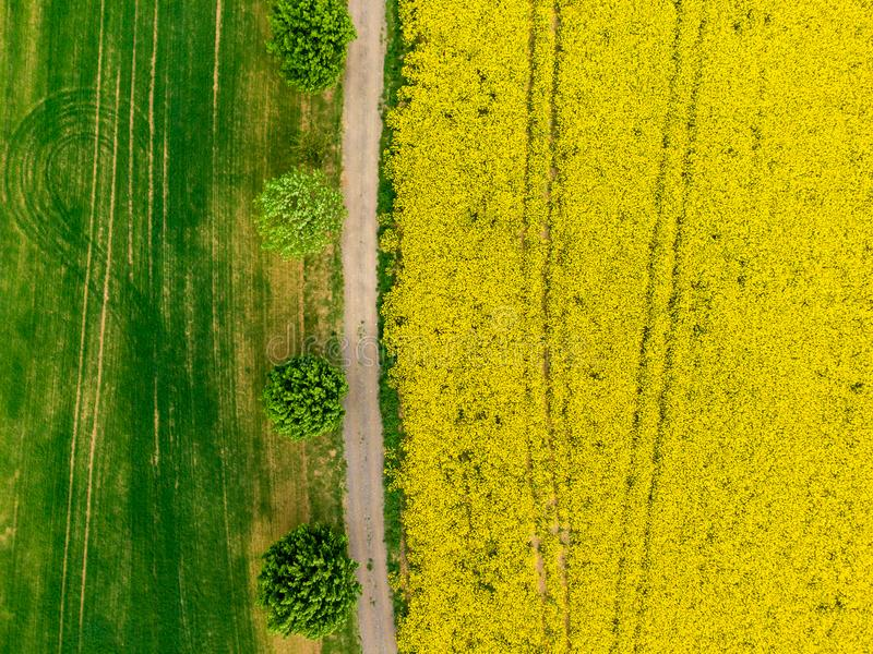 Vogelperspektive der Stra?e zwischen den gr?nen und gelben Feldern Landwirtschaftsbrummen geschossen vom Canolarapssamenfeld und  stockbilder