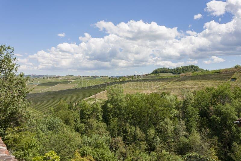 Vogelperspektive der Weinberge von Barolo, Piemont lizenzfreie stockfotografie
