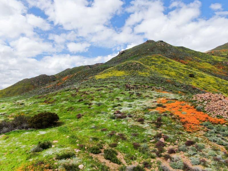 Vogelperspektive des Berges mit goldener Mohnblume Kaliforniens und der Goldvorkommen, die in Walker Canyon, See Elsinore, CA blü stockbild