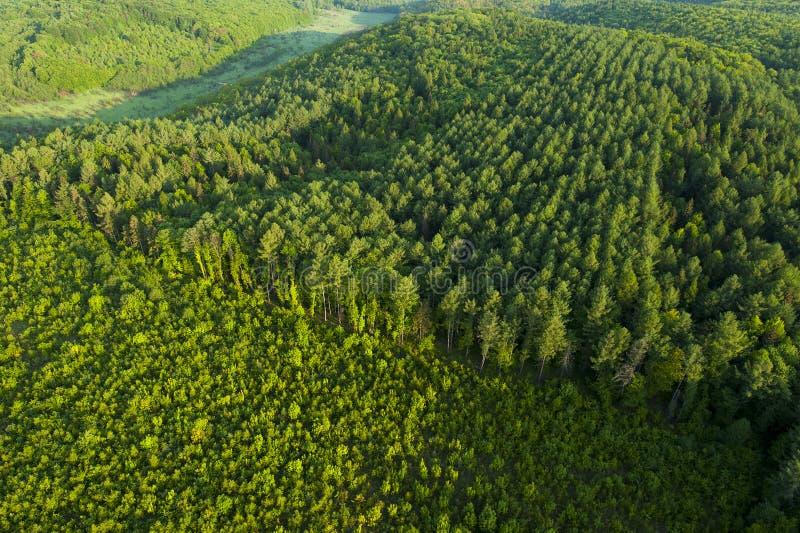Vogelperspektive des Frühlingswaldes lizenzfreie stockfotografie