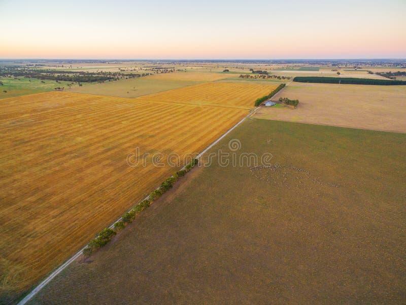 Vogelperspektive des geernteten landwirtschaftlichen Feldes und der Weiden an den Sonnen lizenzfreies stockbild