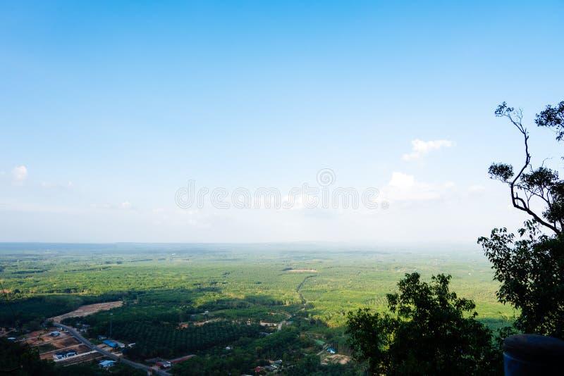 Vogelperspektive des Gummibaum- und Palmenfeldes im Sommer mit blauer SK lizenzfreie stockbilder