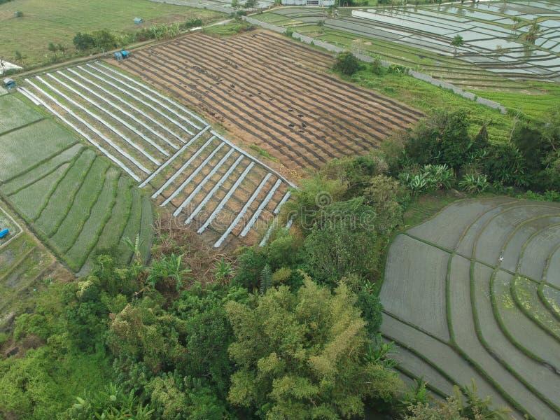 Vogelperspektive des Reisfeldlandes an tanah Los Bali lizenzfreies stockfoto