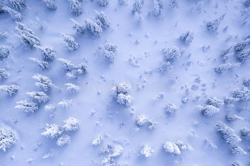 Vogelperspektive des schneebedeckten gezierten Waldes des Winters lizenzfreie stockfotos
