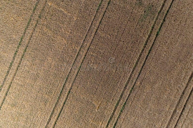 Vogelperspektive des Weizenfeldes und -bahnen von der landwirtschaftlichen Beschaffenheit des Traktors oder Hintergrund der Somme stockfoto