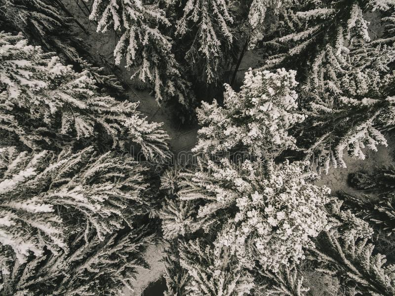 Vogelperspektive einer Kiefernwaldwinter-Waldbeschaffenheit des Winters schneebedeckten Luftbrummenansicht einer Winterlandschaft lizenzfreies stockfoto