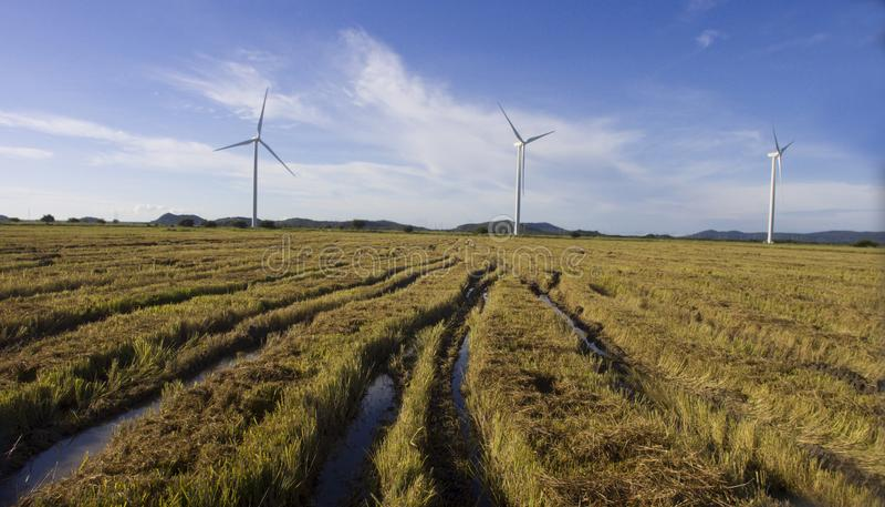 Vogelperspektive eines geernteten Reisfeldes stockfoto