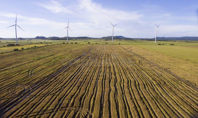 Vogelperspektive eines geernteten Reisfeldes stockfotos