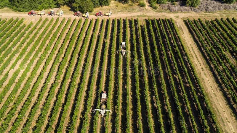 Vogelperspektive eines Traktors, der Trauben in einem Weinberg erntet Landwirtsprühweinreben mit Traktor stockbilder