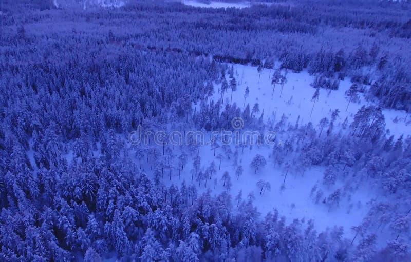 Vogelperspektive oder Draufsicht des Winterwaldes, Kiefer mit dem Schnee bedeckt Weiße Schneeflocken auf einem blauen Hintergrund lizenzfreie stockbilder