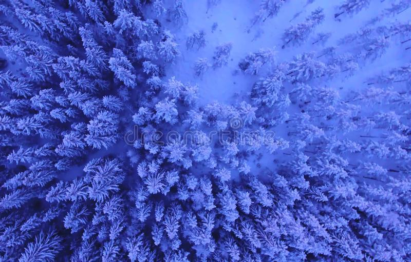 Vogelperspektive oder Draufsicht des Winterwaldes, Kiefer mit dem Schnee bedeckt Weiße Schneeflocken auf einem blauen Hintergrund lizenzfreies stockfoto
