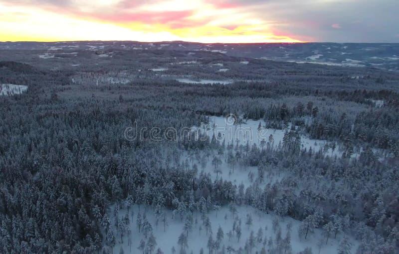 Vogelperspektive oder Draufsicht des Winterwaldes, Kiefer mit dem Schnee bedeckt Weiße Schneeflocken auf einem blauen Hintergrund lizenzfreies stockbild