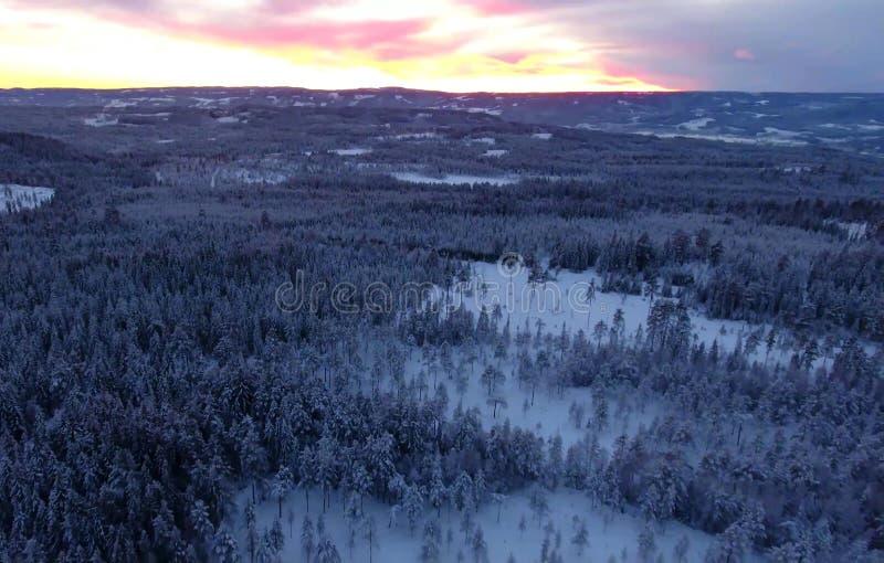 Vogelperspektive oder Draufsicht des Winterwaldes, Kiefer mit dem Schnee bedeckt Weiße Schneeflocken auf einem blauen Hintergrund lizenzfreie stockfotos