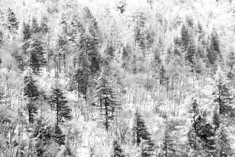 Vogelperspektive von den Bäumen bedeckt durch Schnee in einem Wald, auf der Seite Subasio-Berges Umbrien, eine Art Zusammenfassun stockfotografie