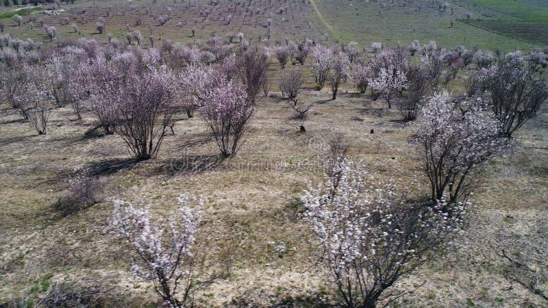 Vogelperspektive von den kleinen Bäumen, die in den Reihen auf Bauernhoffeldern vor schönem See, Landwirtschaftskonzept wachsen s stockfotos